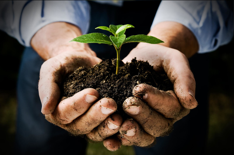 soil mineralize with mulched waste