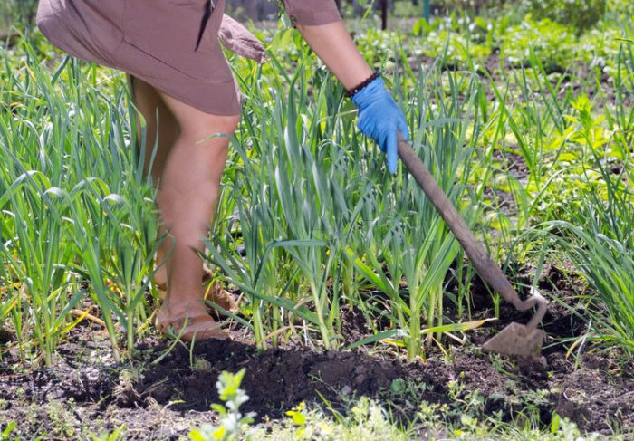 Top 10 Most Used Gardening Tools